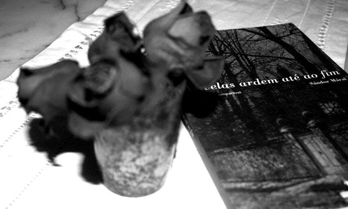 onde-deixei-o-meu-livro-03.jpg